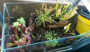 Pflanzen Für Terrarium : karnivorenterrarium beleuchtung pflanzen terrarium fleischfressende pflanzen ~ Orissabook.com Haus und Dekorationen