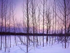 winter trees introdekatelyn