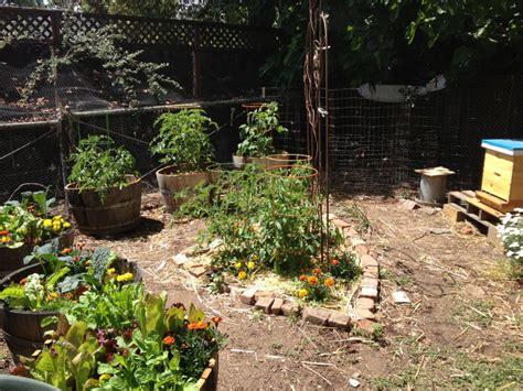 Backyard Farming Update Part 1