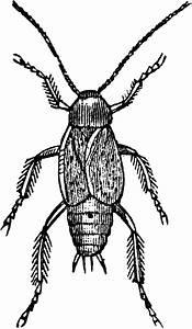 Male Cockroach | ClipArt ETC | Clipart Panda - Free ...