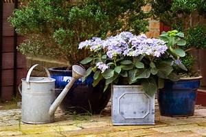 Hortensie Als Zimmerpflanze : hortensien gie en wie oft wie viel und mit welchem wasser ~ Lizthompson.info Haus und Dekorationen