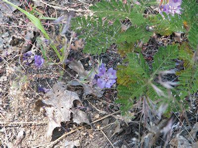 Mamma Quail Hiking California From Cherry Lake