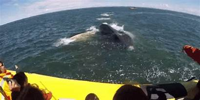 Boat Whale Outdoors Close Call