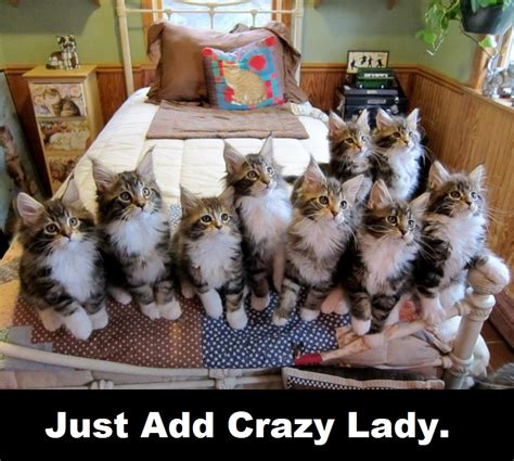 Crazy Cat Lady Meme - crazy cat lady funny www pixshark com images galleries with a bite
