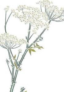 queen annes lace clipart clipground