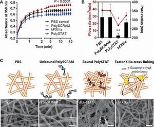 A synthetic fibrin cross-linking polymer for modulating ...