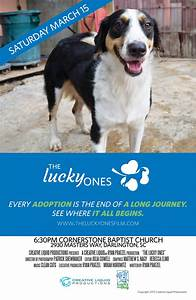 Lucky Dog Animal Rescue and the Florence Area Humane ...