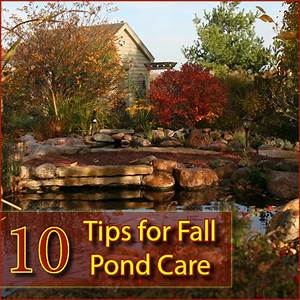 10 Tips For Fall Pond Care