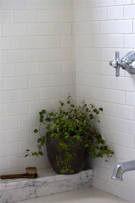 best plant for windowless bathroom best 20 low light houseplants ideas on indoor
