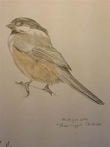 Black Capped Chickadee Flying Drawing