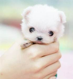 Puppies, Cute Puppy Names, Pictures of Puppies & More ...