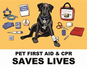 Image result for pet cpr