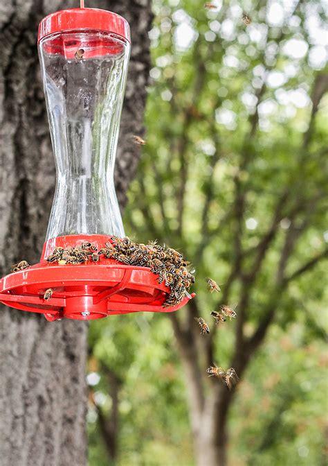 hummingbird feeder tips the birds and the bees battling bees at hummingbird feeders