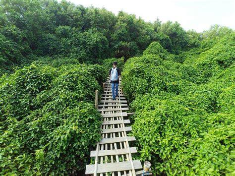hutan mangrove indonesia indonesian climbing record