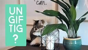 Gemüse Für Katzen : 6 ungiftige pflanzen f r katzen youtube ~ Watch28wear.com Haus und Dekorationen