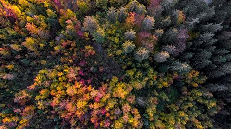 aerial view   forest  autumn gingins vaud canton