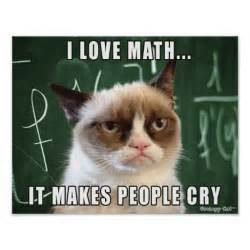 kittens with quotes about math quotesgram