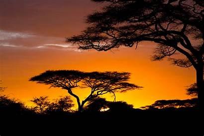 Safari African Africa Sunrise Nature Related Wallpapers