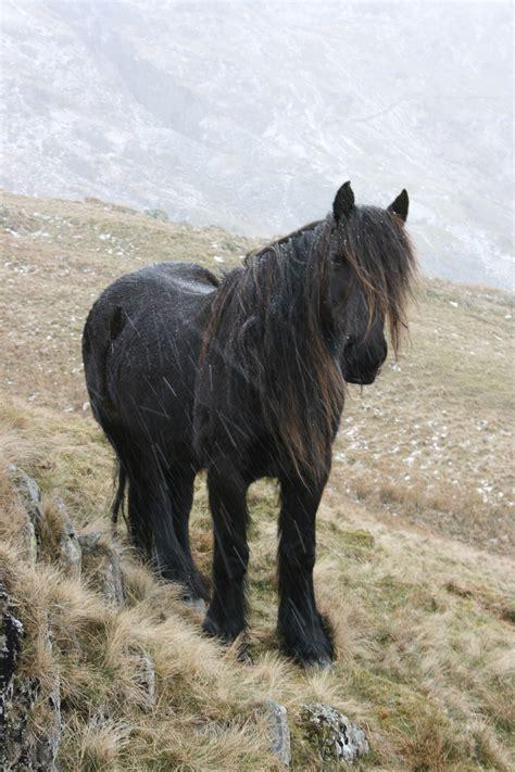 pony fell wikipedia wiki