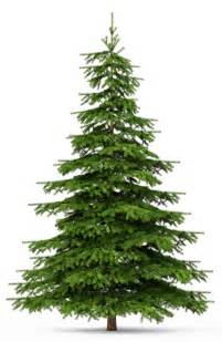 real christmas trees in camberley mr emments