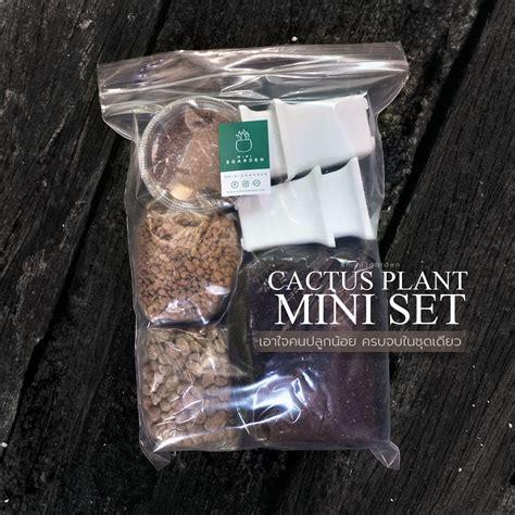 #ชุดปลูกแคคตัส Cactus Plant Mini Set ราคา 120 บาท บรรจุ 5 ...
