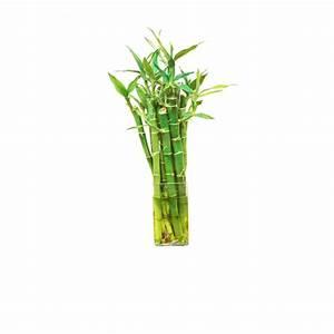 Pflanzen Günstig Kaufen : pflanzen g nstig online kaufen mein sch ner garten shop ~ A.2002-acura-tl-radio.info Haus und Dekorationen