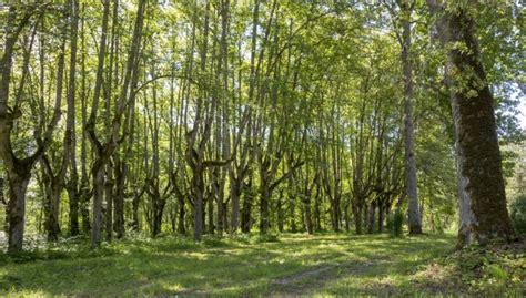 Foto: Maģiskais Lindes muižas parks, kur koki šķietami aug ...