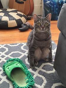 hilarious cats sitting in fuzzfeed