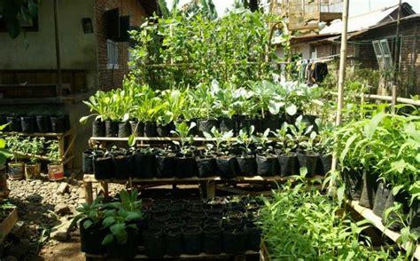 Tanaman Sayuran Dan Bumbu Oregano dari halaman rumah harga kebutuhan pokok bisa