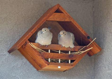 mourning dove birdhouse plans