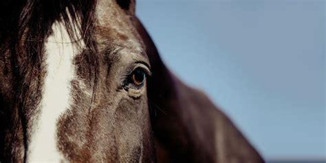 haftpflichtversicherung hund katze pferd friendsurance