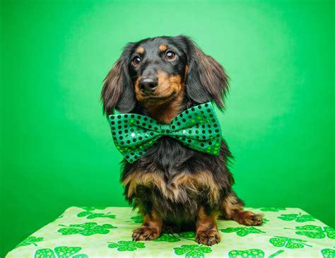 17 St Patrick S Day Jokes That Will Definitely Make You