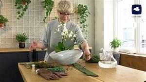 Orchideen Im Glas Dekorieren : diy orchideen effektvoll dekorieren leonardo youtube ~ Watch28wear.com Haus und Dekorationen