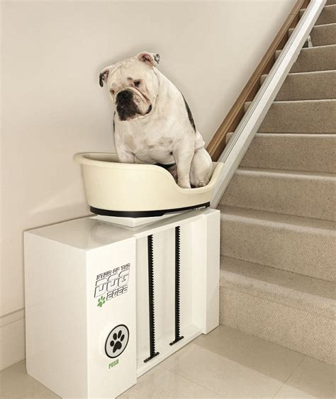 canine stairlift created to give elderly dogs a lift