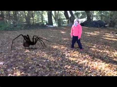 la mygale la plus grande du monde