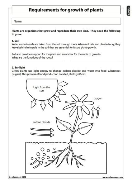 science worksheets for 4th grade free kidz activities