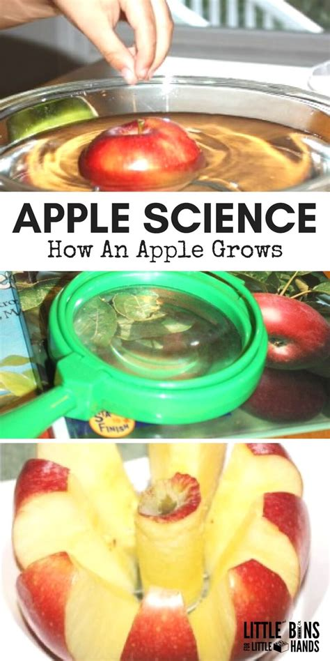 parts of an apple activity bins for 120 | APPLE SCIENCE How An Apple Grows