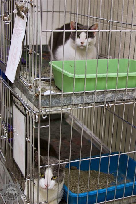 cat adoption   animal control  pet adoption