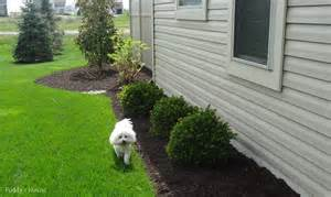 Home Decorators Home Depot Promo Code by Charming Landscaping Ideas On A Budget 13 Diy Front Yard