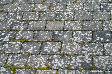 flechten auf dachpfannen entfernen flechten pflastersteinen entfernen 4 nat 252 rliche hausmittel