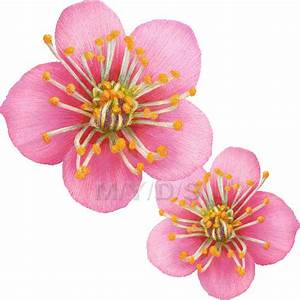 Free Chinese Flower Clipart (9+)