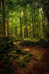 Enchanted Forest On 500px By Warren Swales England U2600 Nikon