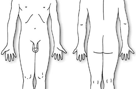 human body diagram body diagram male pain dr