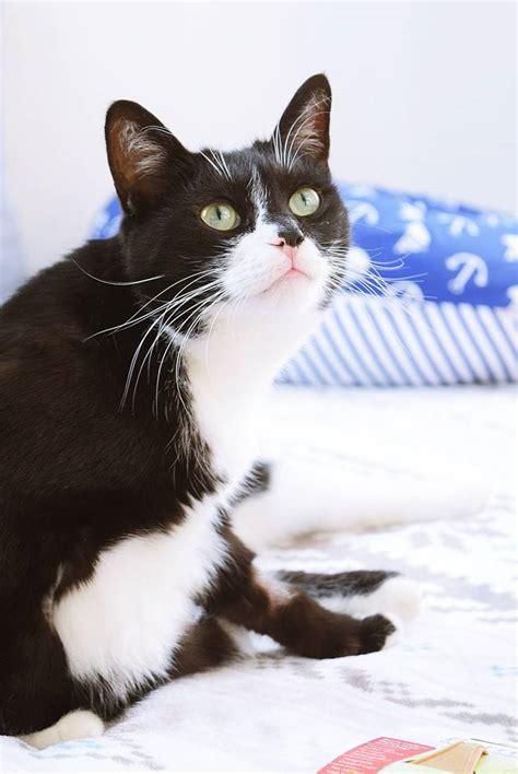 Katze Flöhe Was Tun by Katze Weg Was Tun Wenn Haustiere Verschwinden