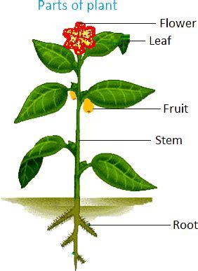 class viscience    plants