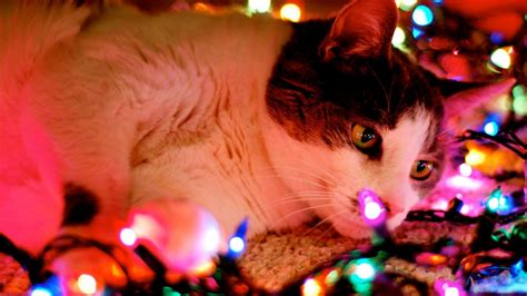 bedroom ideas for 1366x768 lights cat collection 16 wallpapers