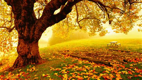 Fall Backgrounds For Desktop Computers by Pretty Autumn Day Wallpaper And Background Image