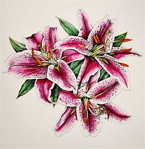 1000  Images About Floral  U2014 Lilies On Pinterest