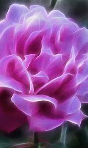 nature, Art, Flowers, Cats, Fractal, Colors, Wallpaper ...