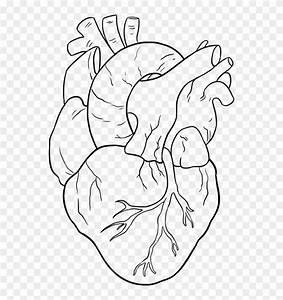 Jayande  Simple Lucy Heartfilia Drawing